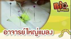 อาจารย์ใหญ่แมลง | Bio O-YEAH! [Mahidol Kids]