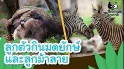 ลูกตัวกินมดยักษ์และลูกม้าลาย   Animals Speak [by Mahidol Kids]