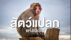 สำรวจโลก ตอน สัตว์แปลกแห่งเอเชีย