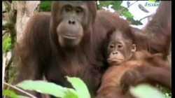 สารคดี สำรวจโลก ตอน สัตว์น้อยในป่าใหญ่ - ลิง