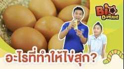 อะไรที่ทำให้ไข่สุก?   Bio O-YEAH!